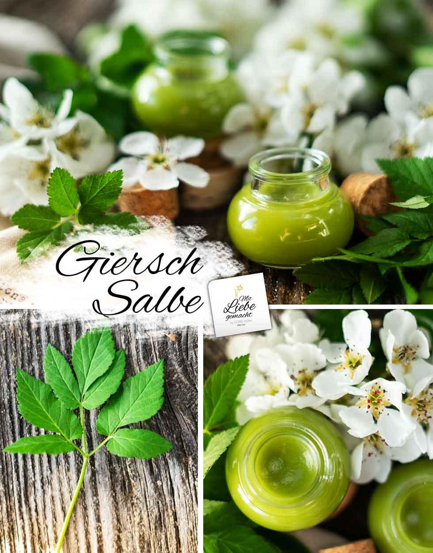 Gierschsalbe selber machen - Glas mit grüner Gierschsalbe; Gierschblatt und weiße Blüten