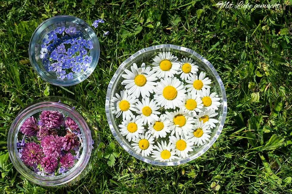 Blütenessenzen selber herstellen