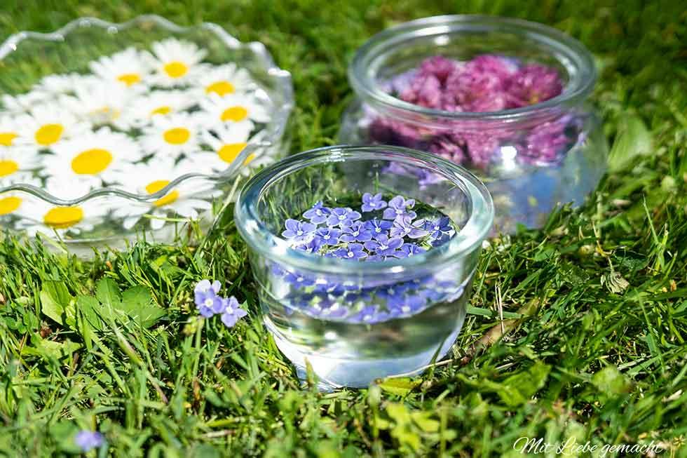 Energie der Blüten - Blütenessenzen