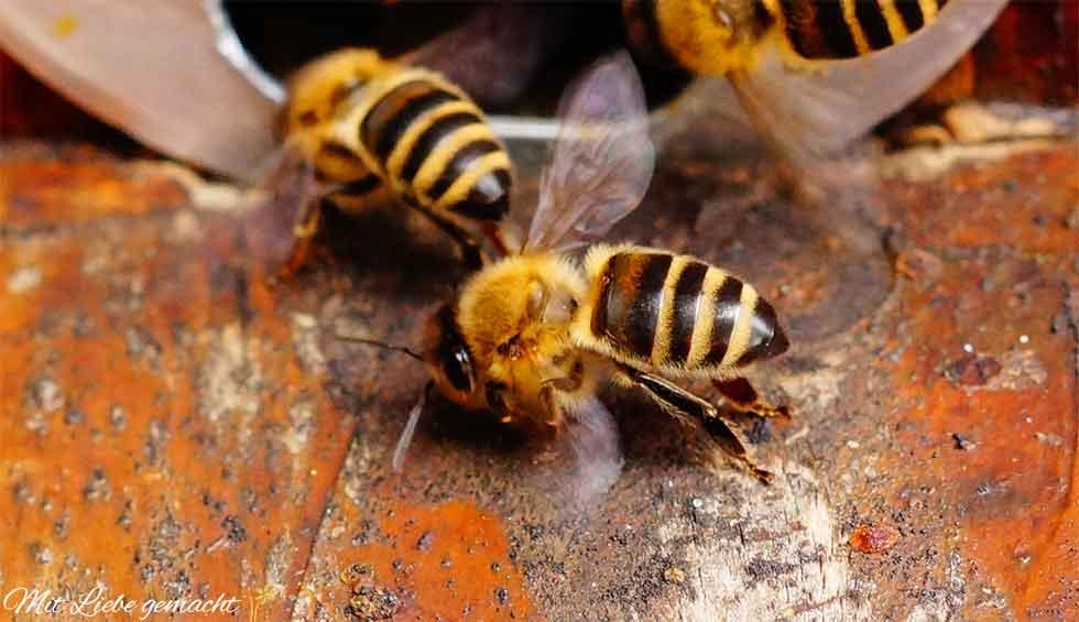 Fleißig Bienen