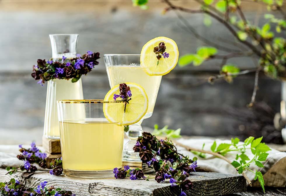 Gundermann Limonade selber machen
