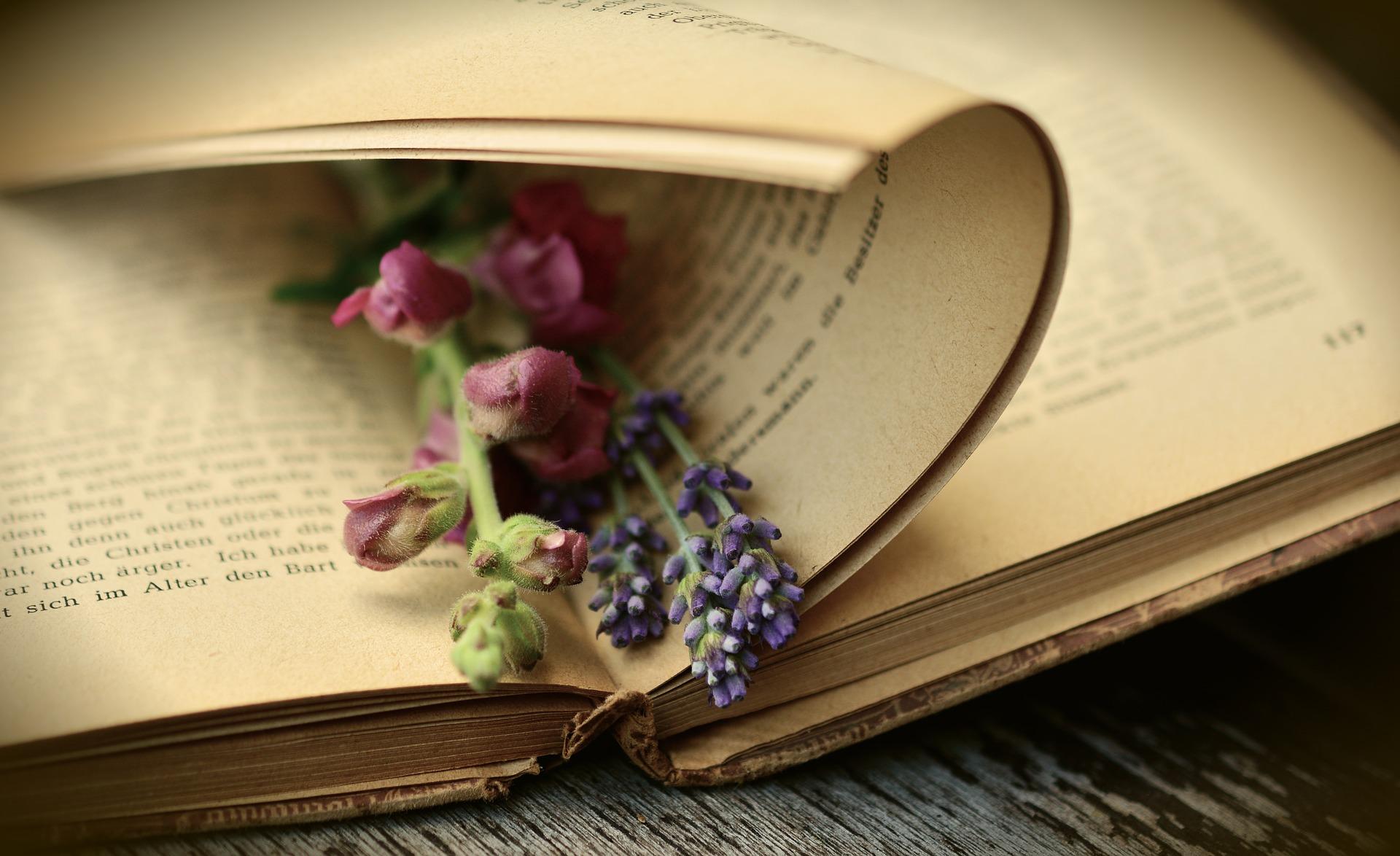 Kräuter Bücher
