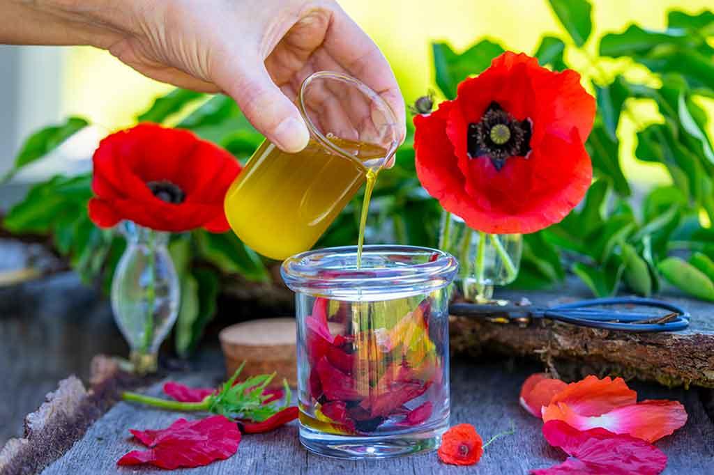 Mohnblütenöl selber machen