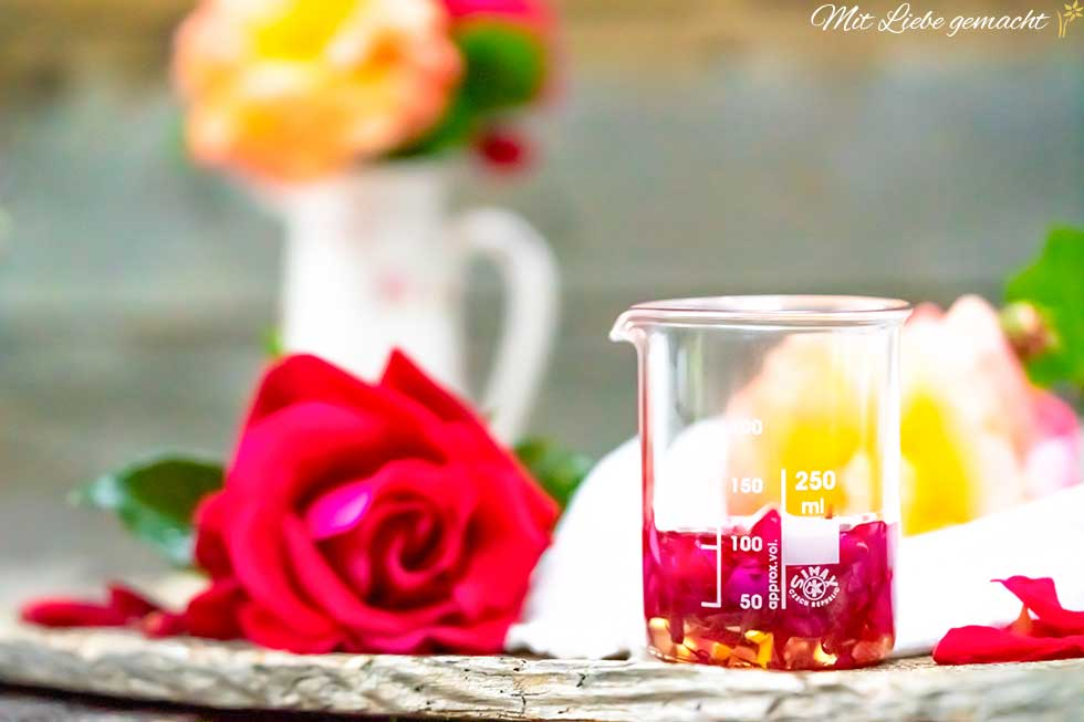 Rosenblüten Mazerat selber machen