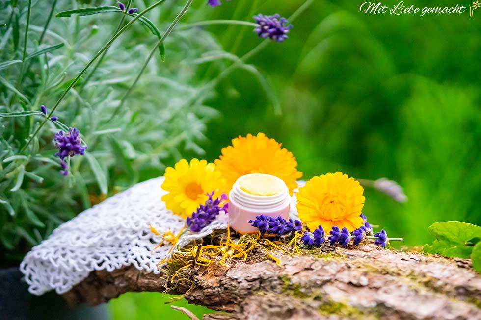 Ringelblumen Lavendel Lippenbalsam selber machen; Lippenpflege in Döschen mit Ringelblumen und Lavendel auf grünem Hintergrund