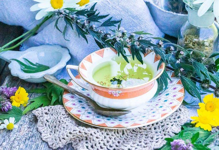 Herzgespann Tee und Tinktur fürs Herz; Tasse mit Tee und Kräuter